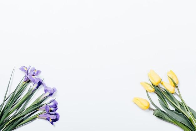Фиолетовые ирисы и желтые тюльпаны на белом фоне