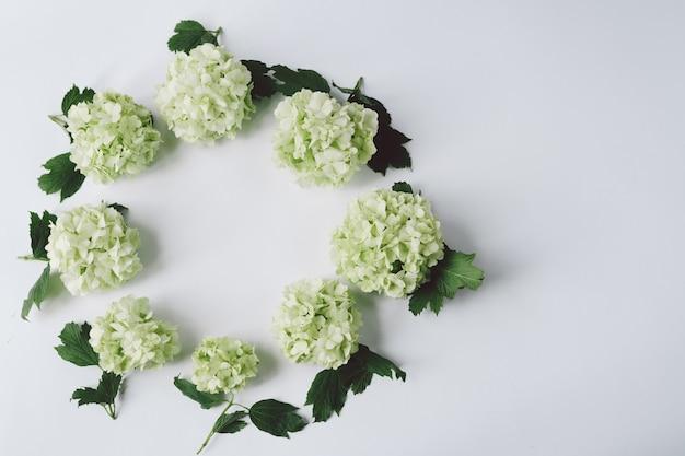白い背景の上に横になっている円の形の葉と緑の花