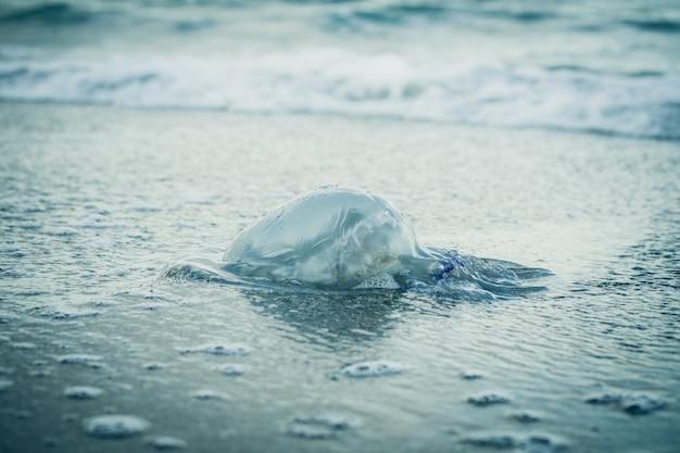 Медузы на пляже в голубых тонах