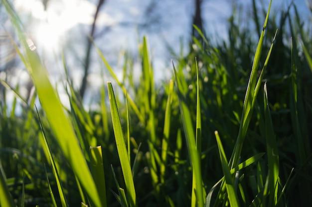 Зеленая трава на солнце