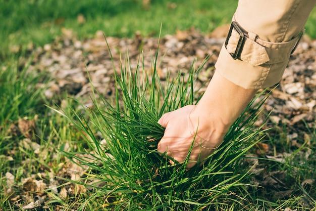 女性の手が地面から草を引っ張る