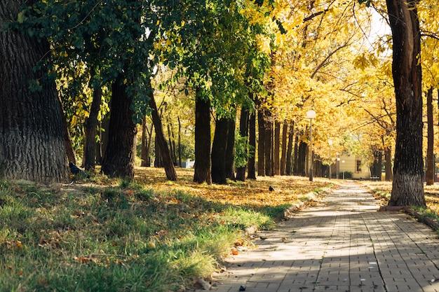 Парк на тротуаре и уличные фонари осенью в солнечный день