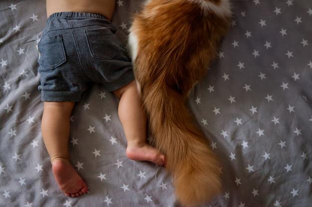 少年の足と猫の尻尾。子供と動物との友情。小さな男の子、幼児、猫と抱擁で寝ています。好きなペット。