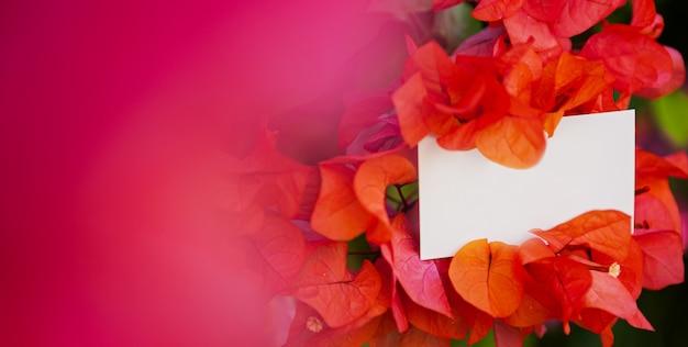 名刺は、赤とピンクのアジサイの花の茂みにかかっています。