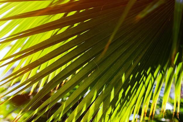 日没の日差しに緑のヤシの葉。バックグラウンド。