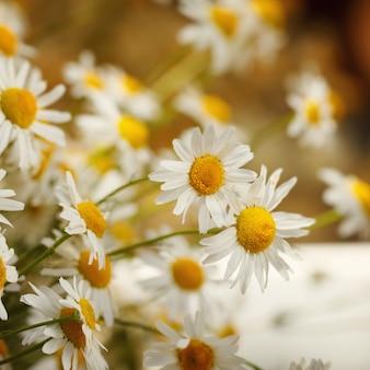 日光でカモミールの花束。夏の朝自然のかわいい背景。