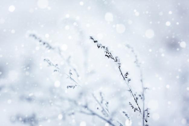 冬の自然の背景。冬の風景。