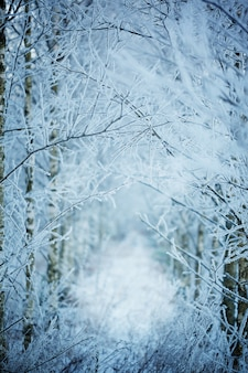 冬の自然の背景。