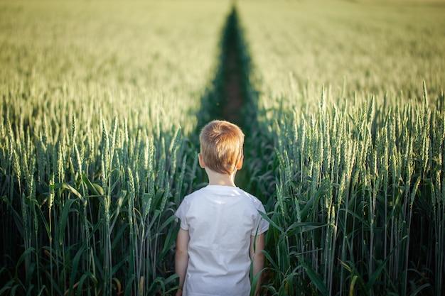 夏の日の緑の野原に立っているかわいい男の子。背面図