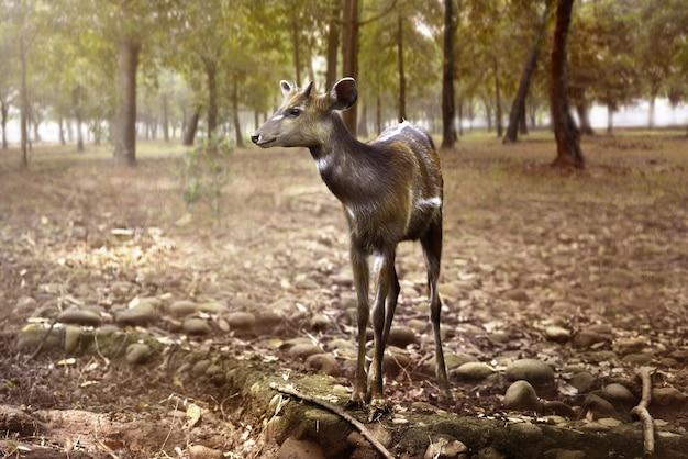 ジャングルの中の雌鹿外観