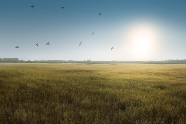 緑の芝生のフィールド上の飛ぶ鳥