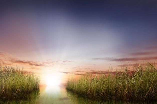 緑の植物と日光のある川のパノラマビュー