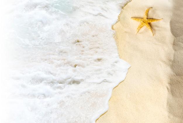 波と砂浜の貝殻のトップビュー