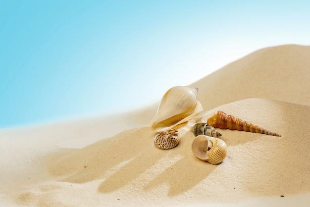 砂浜の貝殻のクローズアップ表示