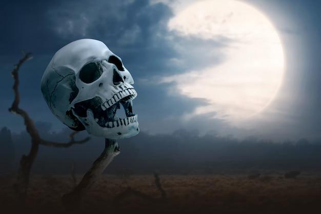 枯れ木の上の人間の頭蓋骨