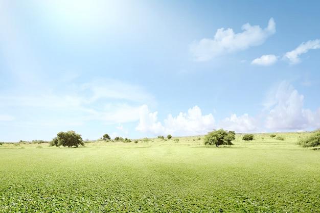 Поле зеленой травы с деревьями