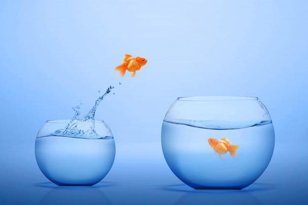 Золотая рыбка выпрыгивает в большой аквариум