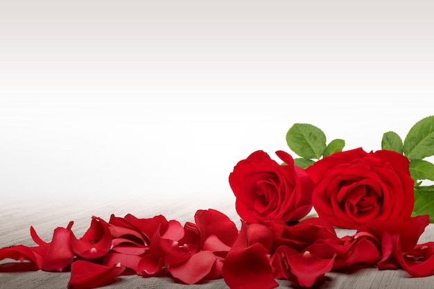 Красная роза и лепестки роз на деревянном столе с белым фоном