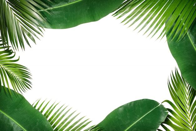 Рамка из зеленых тропических листьев на полу