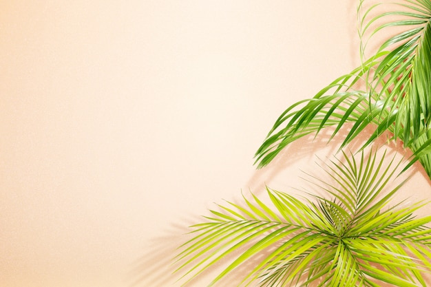 緑のヤシの葉