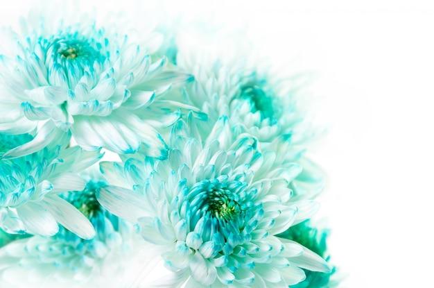 活気に満ちたアクアダリアの花