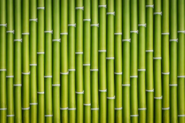 Бамбуковый фон ствола