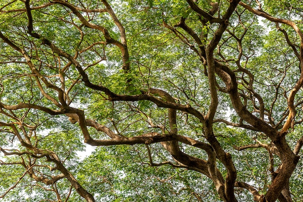 枝と緑の葉