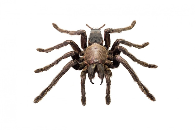 分離されたクモ