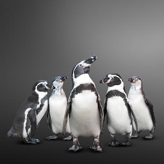 Пингвин группа