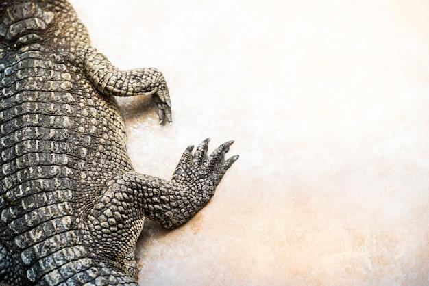 Тело крокодила