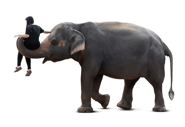 象からの輸送