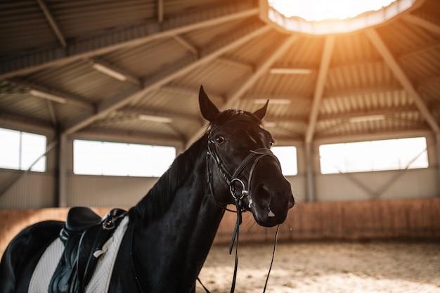 馬小屋のサドルは日光でクローズアップ
