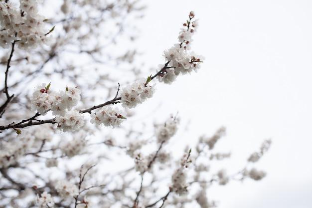 Цветущее дерево над природой