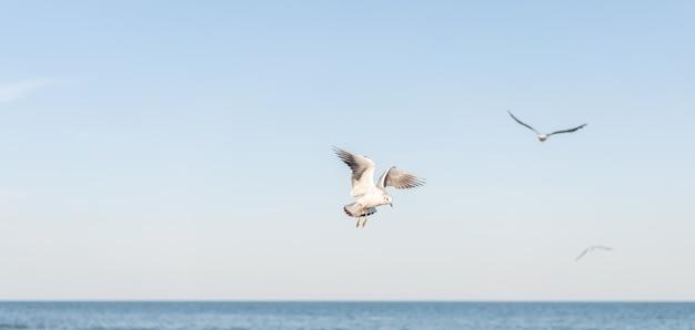 いくつかの美しい白いカモメが海の水面上を飛ぶ