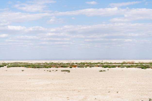 乾燥した海の風景