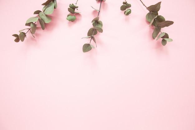 コピースペースとミレニアルピンクの背景にユーカリの枝。上端にユーカリ。
