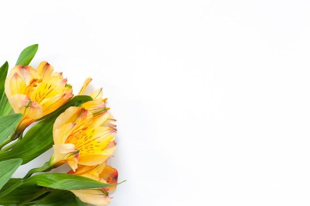 白い背景の上の黄色い花アルストロメリアの花束