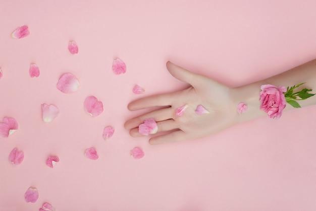 ピンクの花と紙の壁の上に横たわる花びら、手スキンケア用化粧品と手。自然な花びらの化粧品、エッセンシャルオイル、しわ防止、老化防止のハンドケア