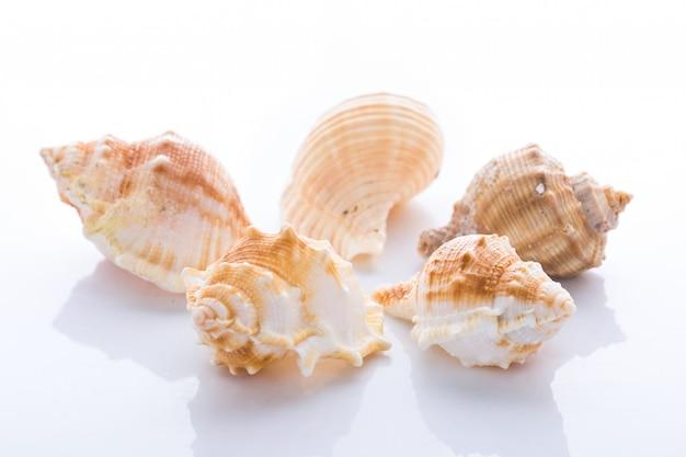 白い背景に分離された様々な軟体動物の殻のセット