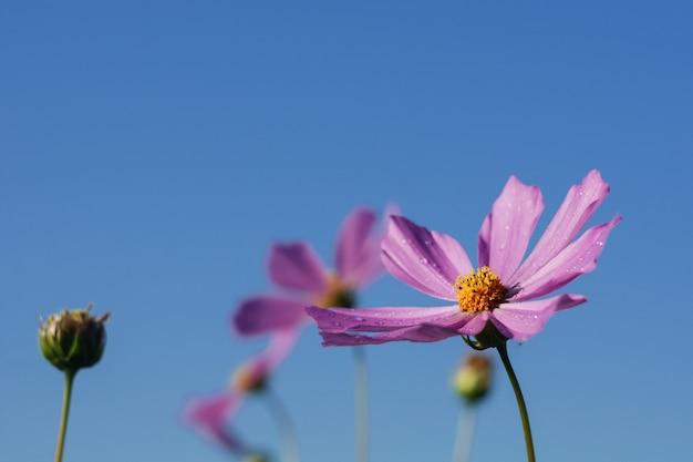 Цветущие фиолетовые цветы на фоне голубого неба