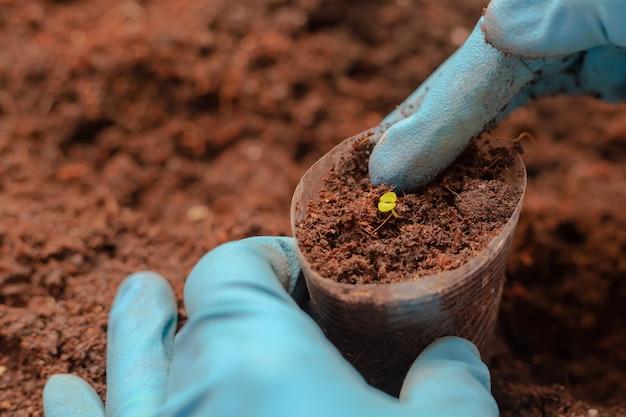 非常に小さな苗を移植する