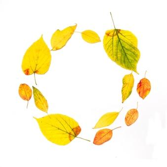 秋の組成物。白で隔離される秋のカエデの葉で作られたフレーム
