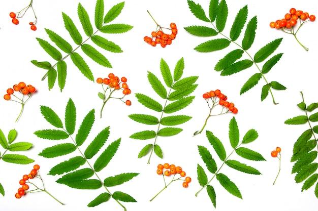 秋の組成物。白のナナカマドの果実のパターン