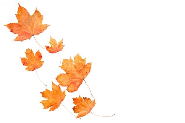 白で隔離される秋のカエデの葉で作られたフレーム