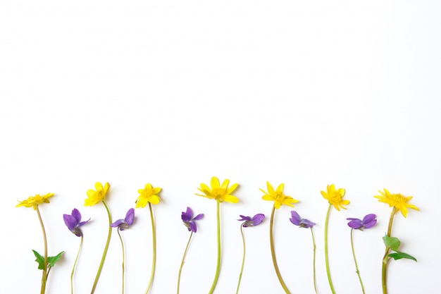 花の組成白地に黄色と紫の花。フラットレイアウト、上面図、コピースペース。