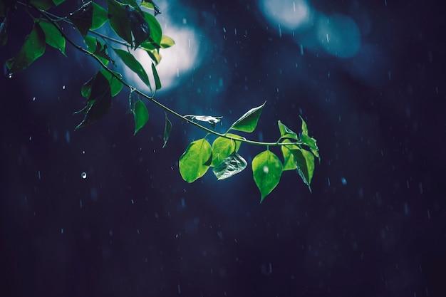 緑の葉の木のセレクティブフォーカス写真
