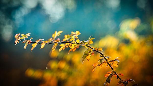 秋の最高の風景写真