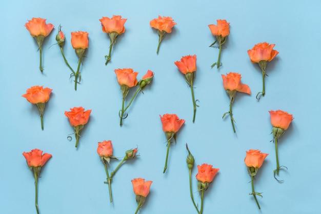 優しいオレンジ色のバラが青の背景に配置されました。上面図。花柄。
