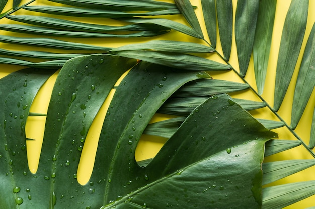 Тропическая картина ладоней и листьев монстера на желтом цвете. вид сверху. летний отпуск.