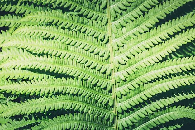 熱帯林の日光とシダの自然な葉。